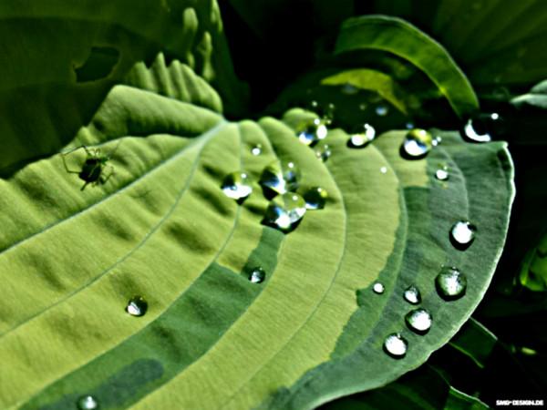 Regentropfen – raindrops