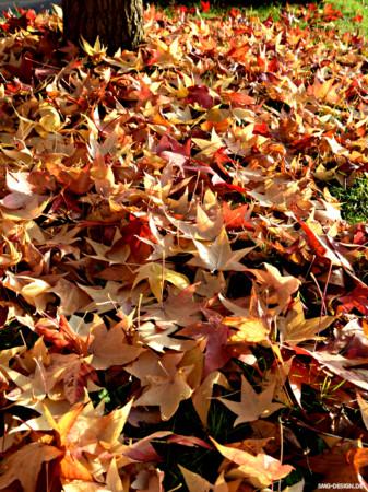 Herbst – Autumn