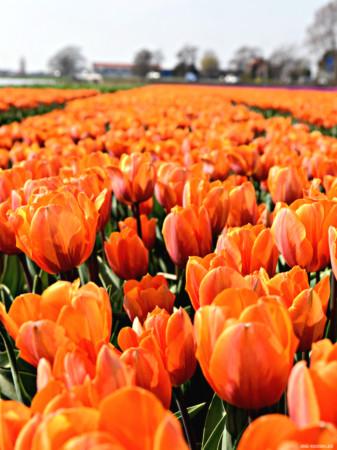 Frühlingszeit – spring time