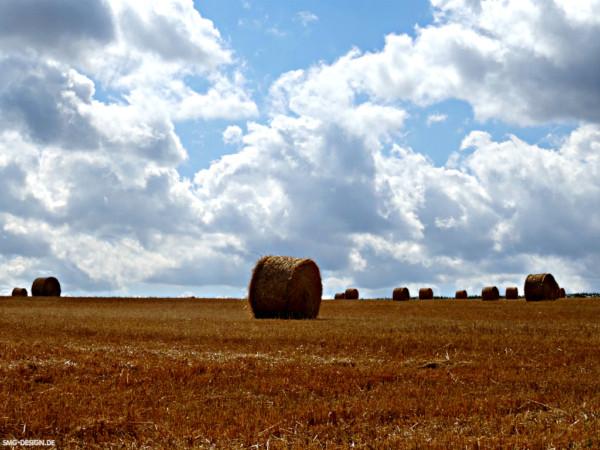 Ernte – Harvest